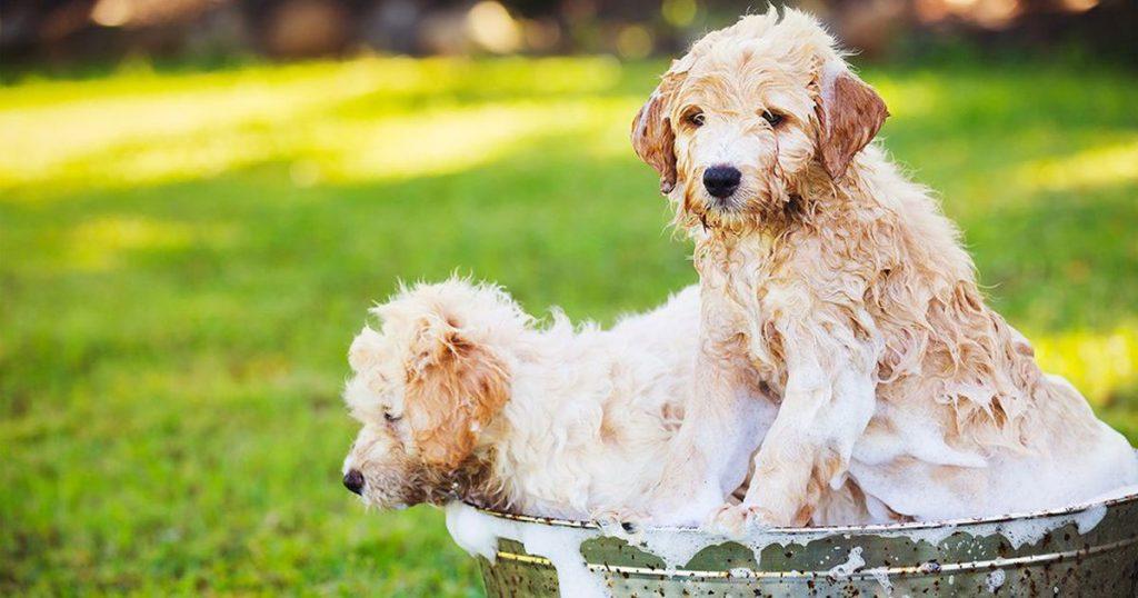 Best Puppy Shampoo image