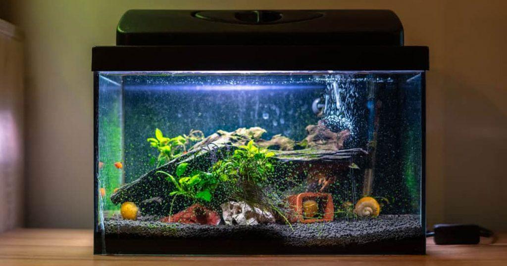 Fish Tanks image