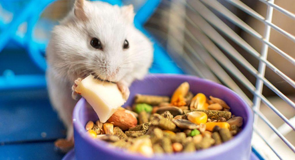 Hamster Food image