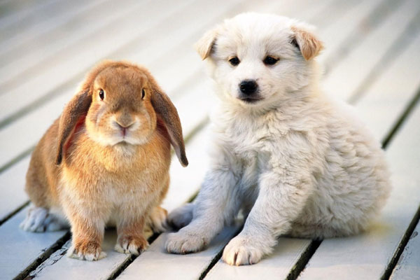 Pets Home Image