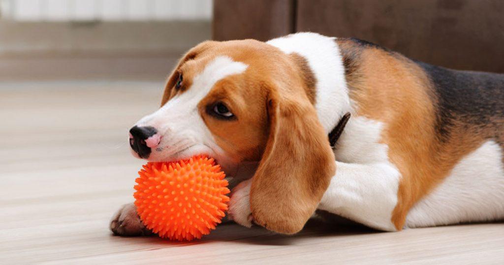 Interactive Dog Toy image